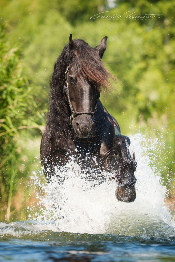 Wien 2015 – Agelan, Caruso & Co. | Professionelle Pferdefotografie München | BR Photographs Claudia und Sven Rahlmeier