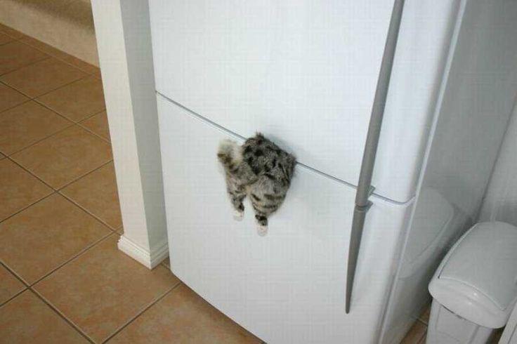 Магниты на холодильник прикольные своими руками