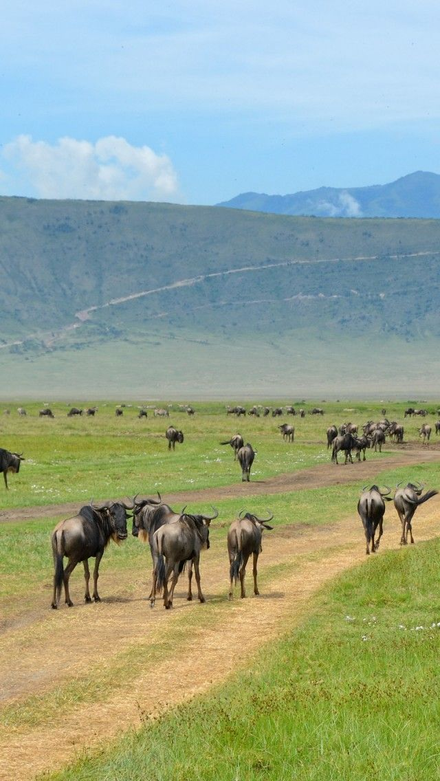 Inside The Ngorongoro Crater, Tanzania, east Africa.  Go to www.YourTravelVideos.com or just click on photo for home videos and much more on sites like this.