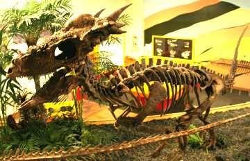Rocky Mountain Dinosaur Resource Center | Colorado Springs ...