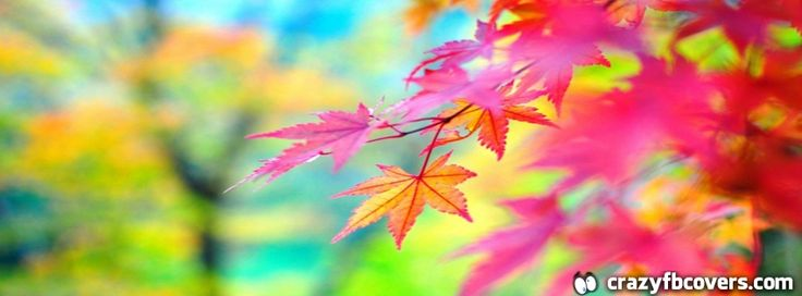 17 Best Images About Autumn Facebook Covers On Pinterest