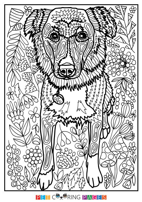 free printable mutt coloring page clara bo available for download simple and detailed