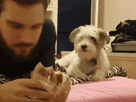 """Lucy will just straight up stare. She don't give a fuck. Then she will talk to you like, """"You know I'm right here, gimmie some!"""""""