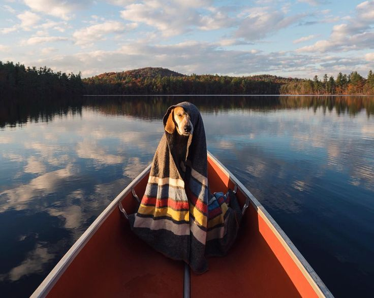 """""""November is gonna be amazing, feeling v blessed ⚡️ I rented a tiny cabin right on a pond in Maine (stocked with this canoe!), I'm heading to NYC for a…"""""""