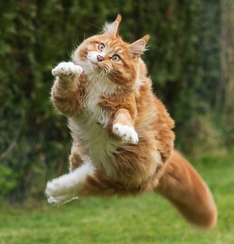 La cara es el espejo del alma. En efecto, super felino al ataque.Без кота и жизнь не та! - Группы Мой Мир