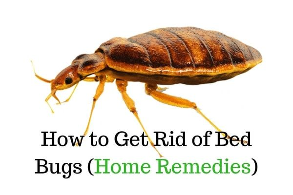 how to detect bed bugs in your home