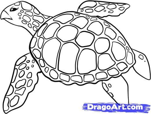 Wie zeichnet man eine Meeresschildkröte, Schritt für Schritt, Meerestiere, Tiere, KOSTENLOSE Online Drawin …