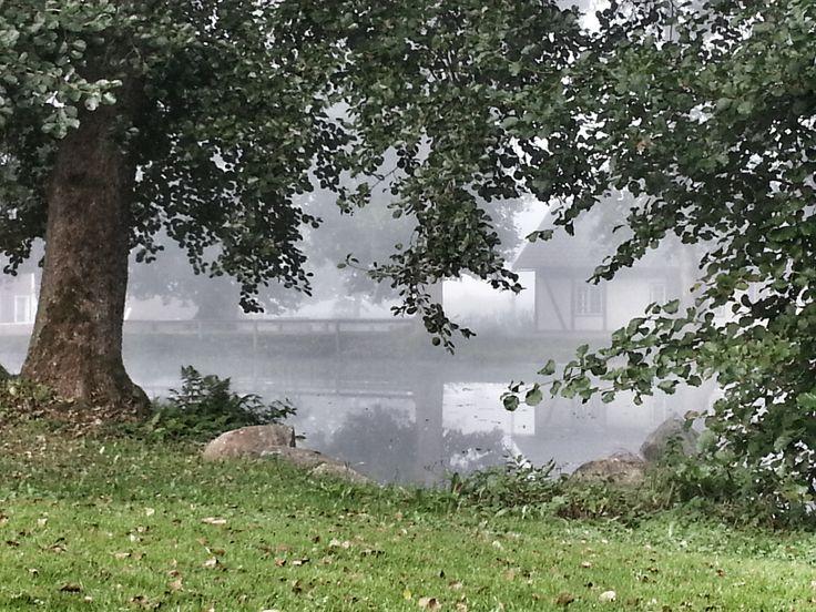 Tidig morgon över dammen