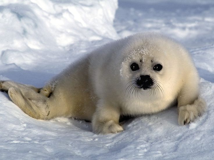 Cute Baby Animals Wallpaper - Android Apps on Google Play