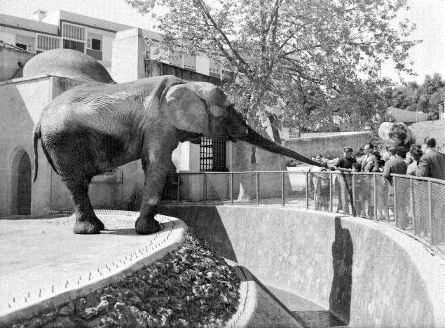 dar moeda ao elefante no Jardim Zoológico e ele tocar a sineta