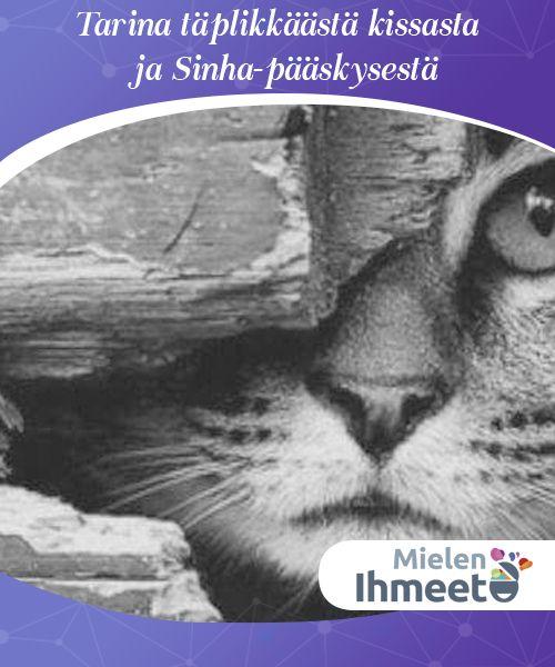 Tarina täplikkäästä kissasta ja Sinha-pääskysestä.  #Jorge #Amadon tarina #mahdottomasta #rakkaudesta koskettaa meitä #kaikkia.