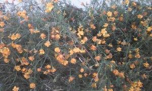 осенние цветы.jpg