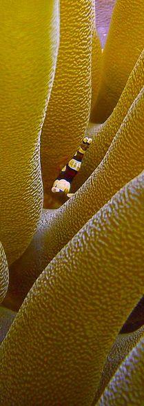 Images | Sealife Cameras www.flowcheck.es Taller de equipos de buceo #buceo #scuba #dive