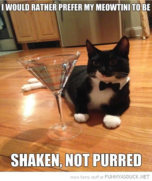 45 Best All Dressed Up Tuxedo Cats Images On Pinterest