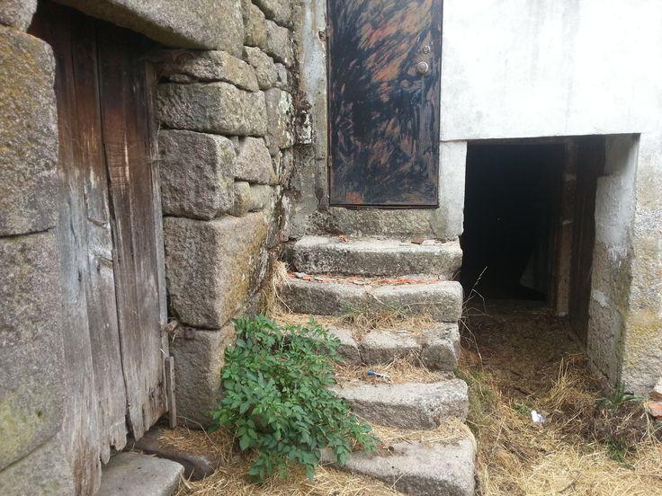 Petit arbuste naissant devant la porte de la vieille maison. Gralhas (près de Montalegre). Nord du Portugal 2013