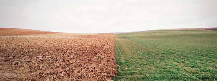 Año Internacional de los Suelos: panorama actual de este recurso no renovable