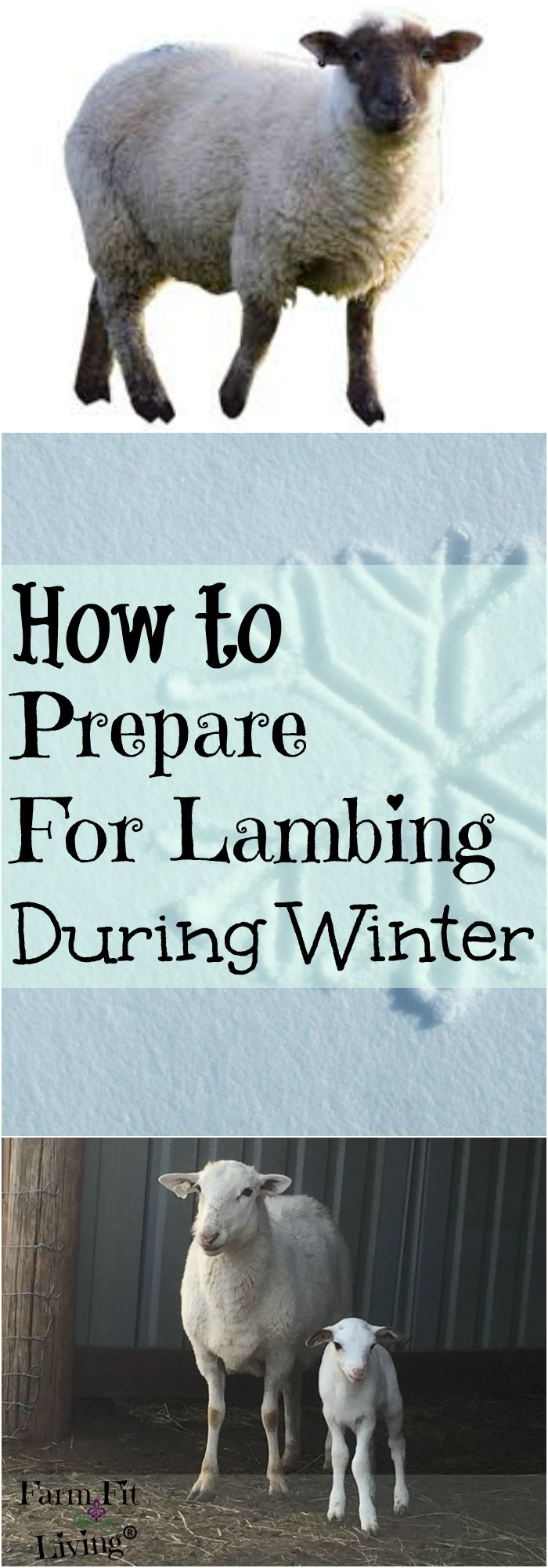 How to Prepare for Lambing Season | Hair Sheep Production | Getting Ready for Lambing