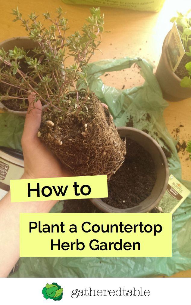 Plant Your Own Countertop Herb Garden Herbs Plants 640 x 480