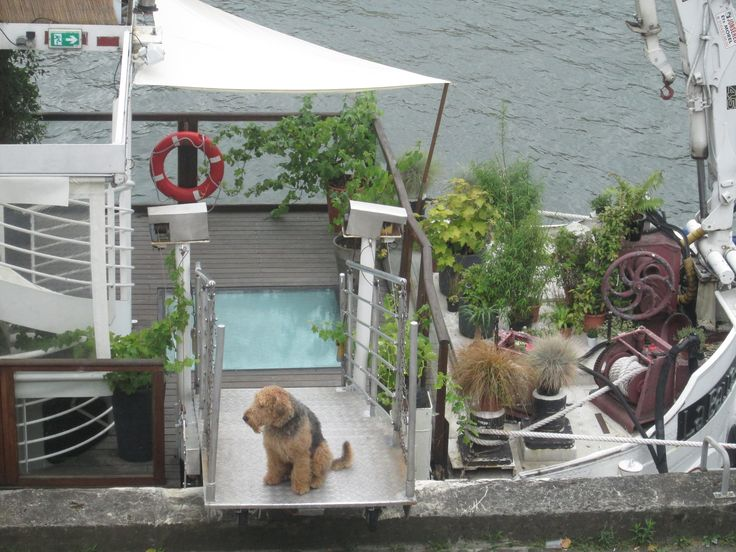 Pensive pooch on a houseboat near the Musee d'orsay in Paris