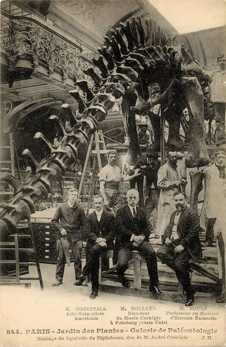 Postcard of Diplodocus carnegiei skeleton cast at the Jardin des Plantes in Paris. Arthur Coggeshall and William Holland from the Carnegie Museum, along with Marcellin Boule of the Paris museum seated and surrounded by museum technicians. The impressive cast was a gift from US industrialist Andrew Carnegie. Photo c. 1908.