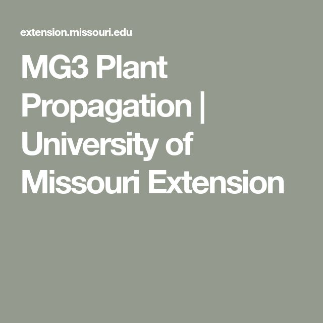 MG3 Plant Propagation | University of Missouri Extension