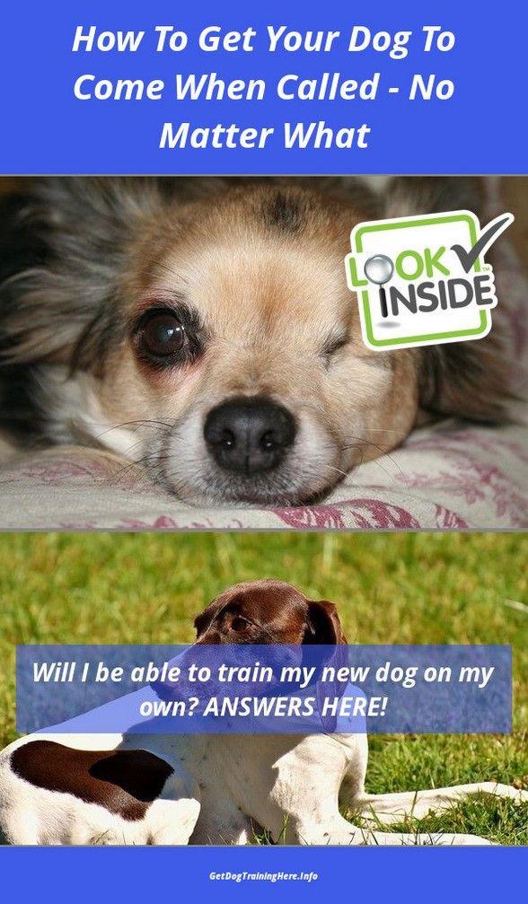 Training Your English Mastiff Puppy And Training Your Puppy Sleep Through Night Puppytraining In 2020 Training Your Puppy Sleeping Puppies English Mastiff Puppies