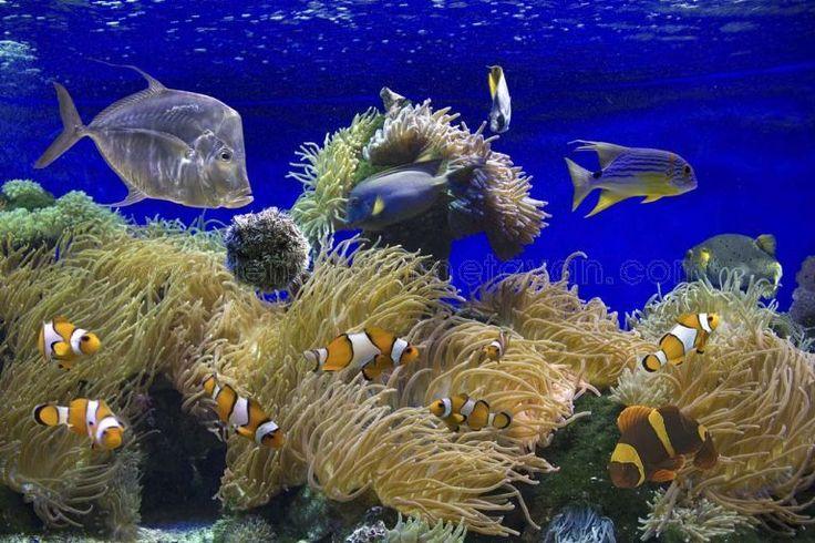 deniz dibi resim - Google'da Ara