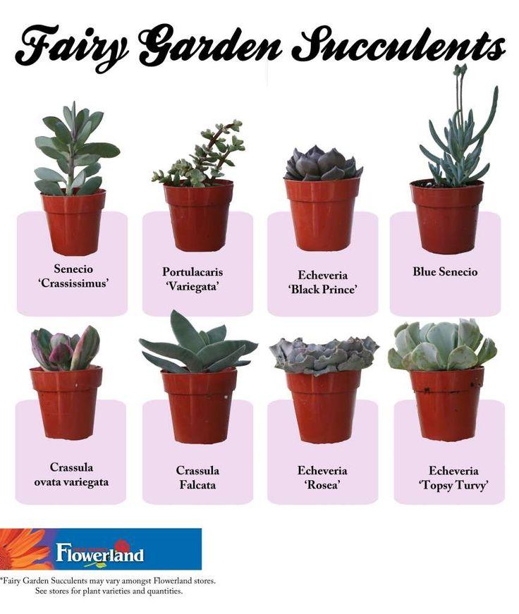 Fairy Gardening » Fruit Basket - Flowerland