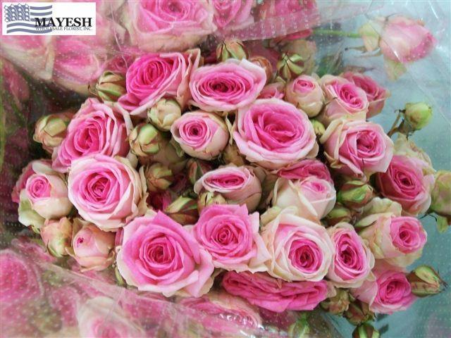 mini eden spray rose floribunda pinterest flowers. Black Bedroom Furniture Sets. Home Design Ideas