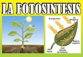 Resultado de imagen para proceso de la fotosintesis