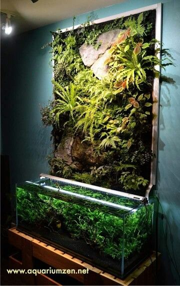 great idea for artfully presenting our lygodactylus vivariums