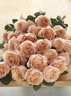 Aphrodite roses. I would love this is an color, they are so gorgeous!