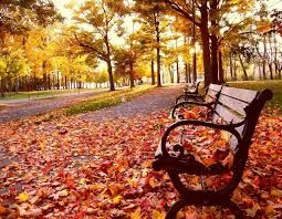What is your favourite thing to do in fall? Photo from Google