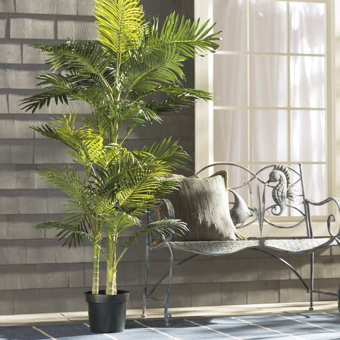 Beachcrest Home Brookings Cane Palm Tree in