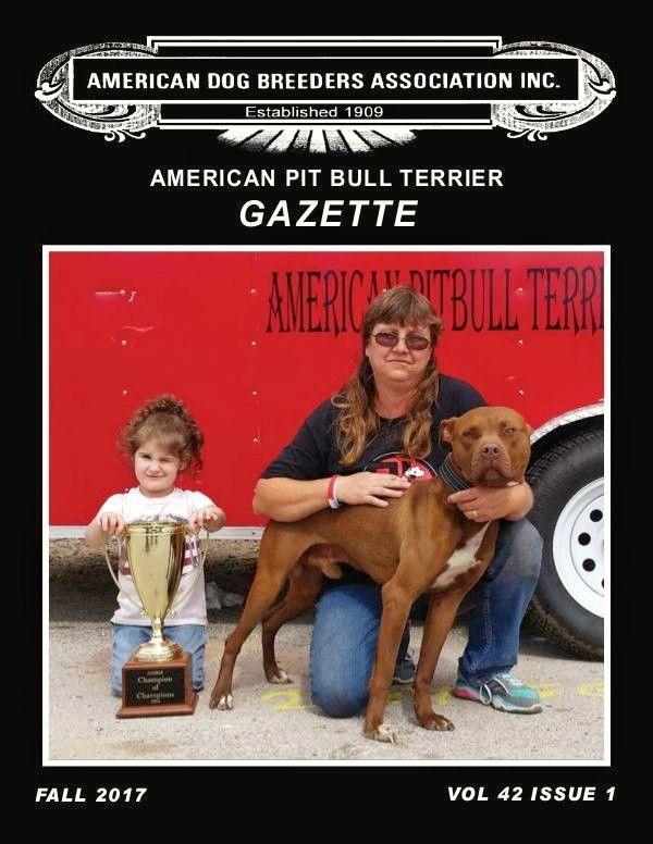 American Pitbull terrier , Apbt , Pitbull , Pit bull Puppy
