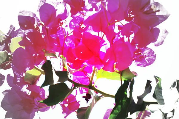 But it is not color,  but the light, I paint.  Black and white are  the colors that  are just damn.  But look here. See how the light  illuminates the red  of the flower.  The light  creates the color.