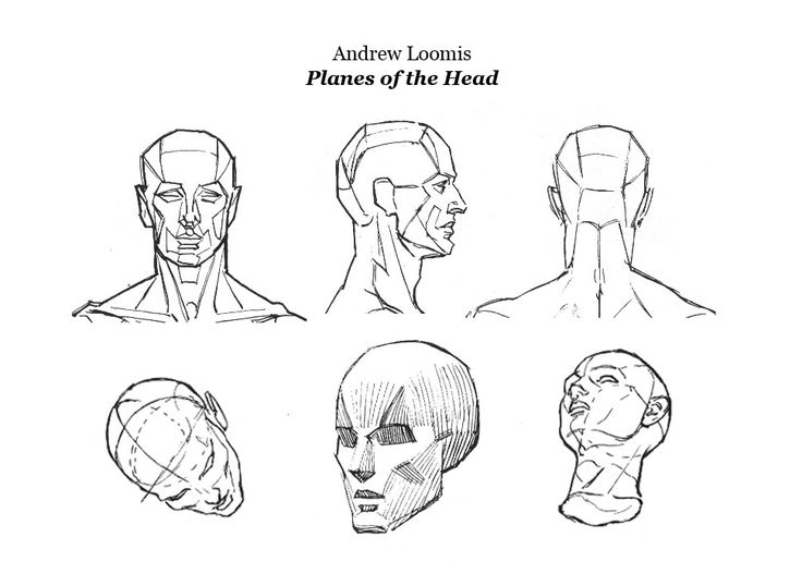46 Best Head Planes Anatomy Images On Pinterest Faces Anatomy