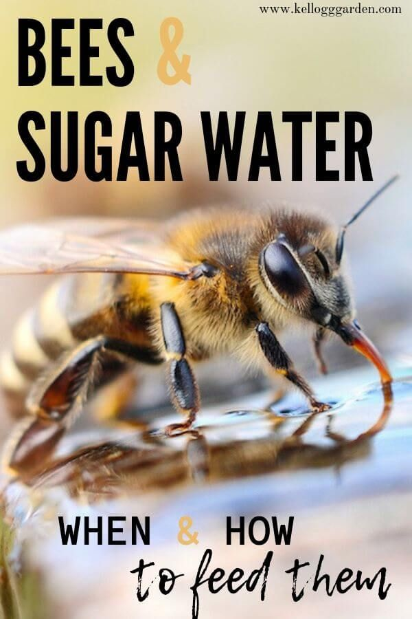 How To Attract Bees With Sugar Water Sugar Water For Bees Feeding Bees Bee