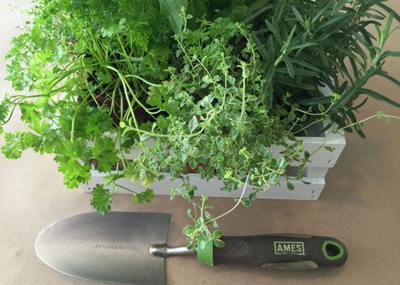Grow Herbs Indoors For Flavor And Fragrance Gardens