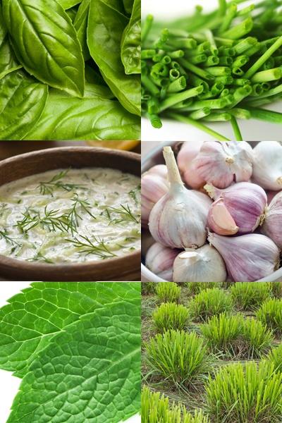 Képgaléria - Neveljünk magunk fűszernövényeket!