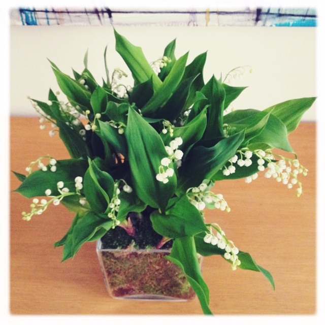 Muguet in May.