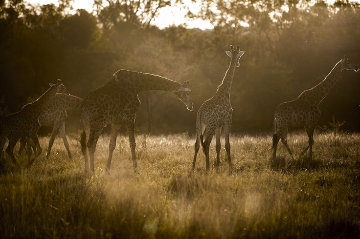 Exclusive Safari Engagements in South Africa http://safariweddings.co.za/engagement-elopement/