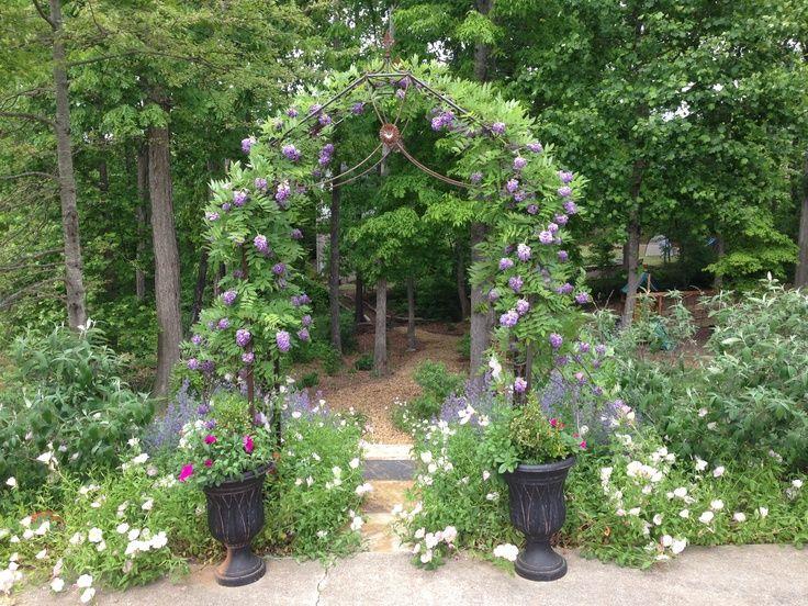 Entrance To My Garden Amethyst Falls Wisteria On Arbor