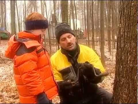 ▶ How Maple Syrup is Made - YouTube