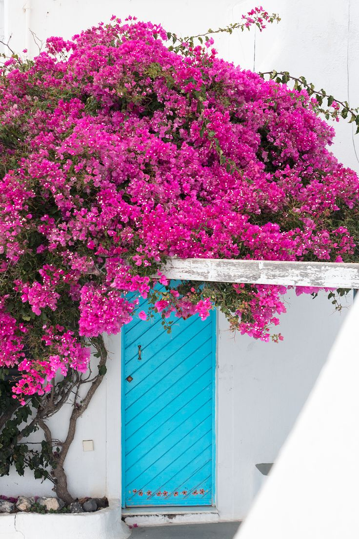Where to find this blue door and pink flowers in Santorini   ESCAPE BUTTON BLOG