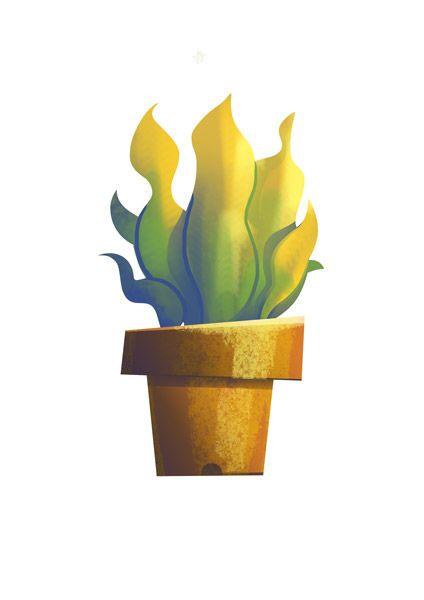 plant / 2014