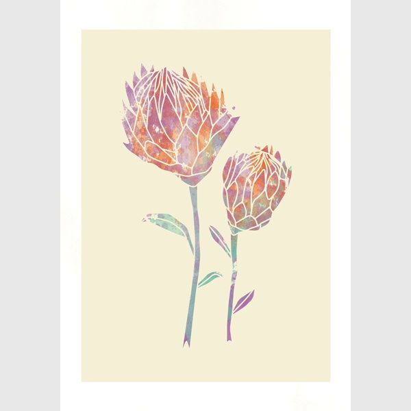 Protea (pastel colours)
