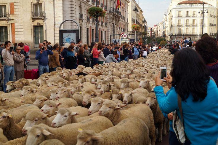 Trashumancia en la Puerta del Sol.