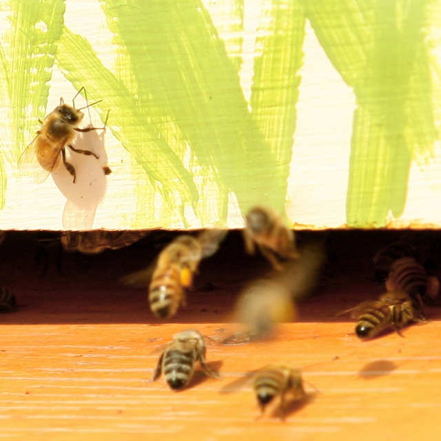 Honeybees atop Food Training #1 by Thompson Rivers, via Flickr  Thompson Rivers University in Kamloops, BC, Canada