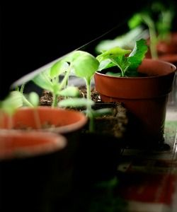 Grow Lights 101: Help Your Indoor Plants Thrive